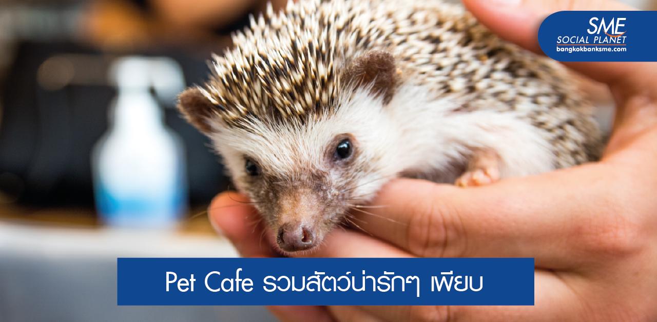 รวมคาเฟ่สัตว์เลี้ยงแปลกๆ ในประเทศไทย