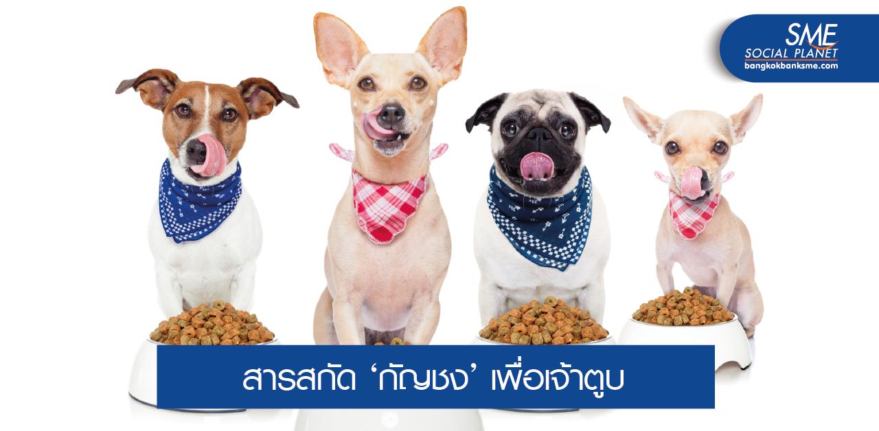 CBD ในกัญชงสำหรับธุรกิจอาหารสัตว์เลี้ยง