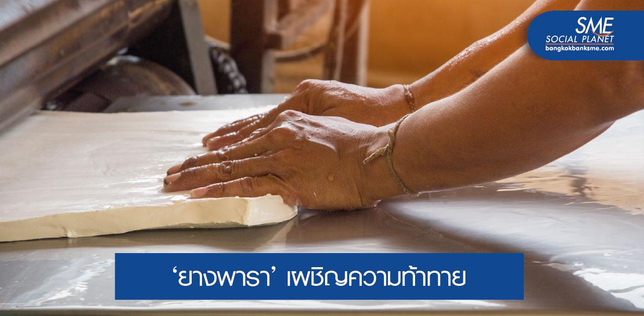 """ยกเครื่อง """"ยางพาราไทย"""" สู่มาตรฐาน FSC"""
