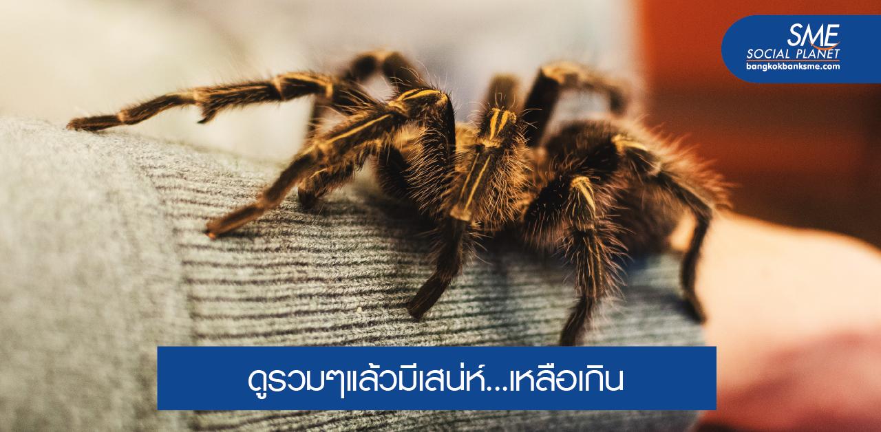 5 สัตว์แปลกที่คนไทยชอบเลี้ยง มีเสน่ห์แบบไม่เหมือนใคร