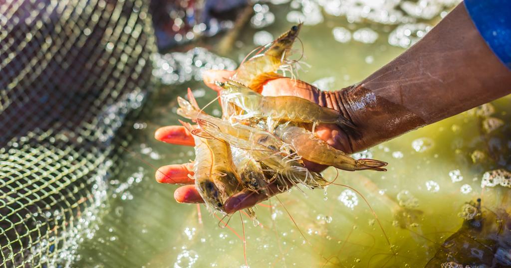 ก.เกษตรฯ หนุนจับคู่ธุรกิจ ขับเคลื่อนกลุ่มสัตว์น้ำ