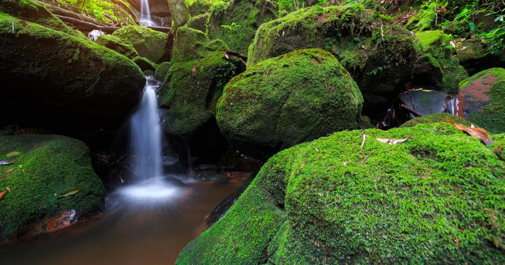 เดินป่าหน้าฝน...ที่ภูสอยดาว