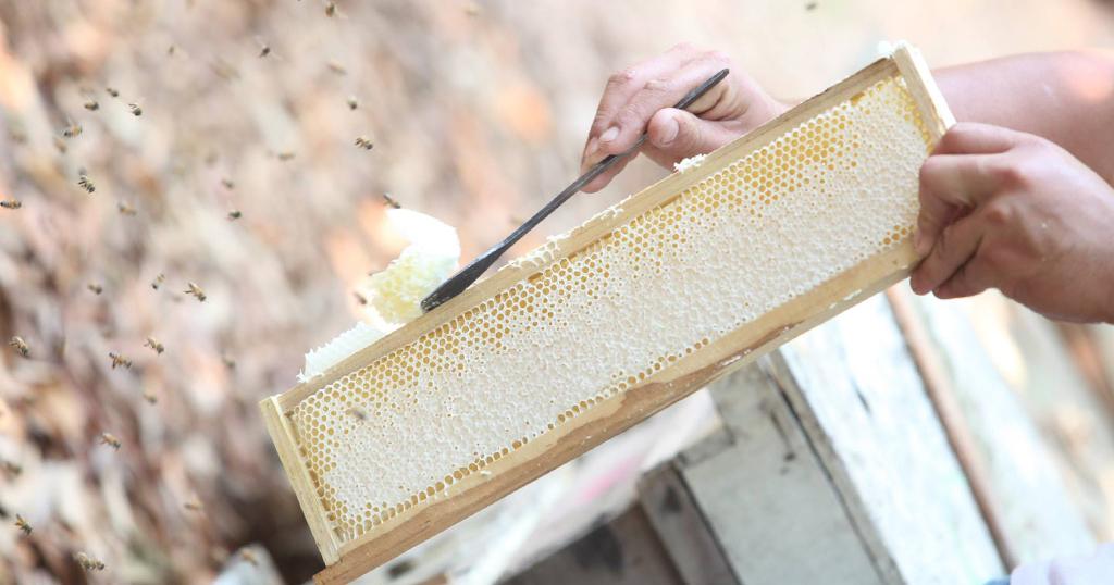 ฟาร์มผึ้ง เกษตรความนิยมต่ำ แต่ยอดขายสูงเฉลี่ย 30 ล้าน/ปี
