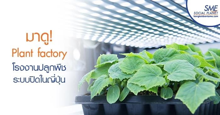 มาดู! Plant factory โรงงานปลูกพืชระบบปิดในญี่ปุ่น