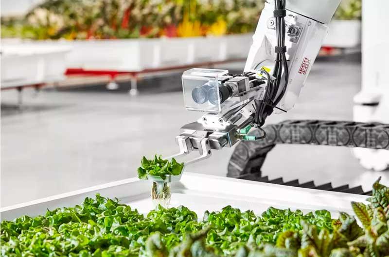 หุ่นยนต์ปลูกผัก